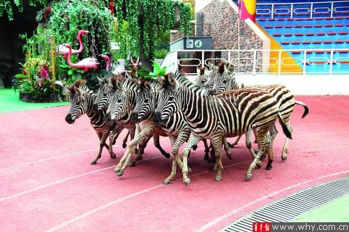 """上海野生动物园将举办""""大家族群英会"""""""