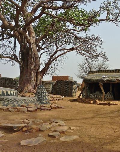排高大的芒果树和猴面包树